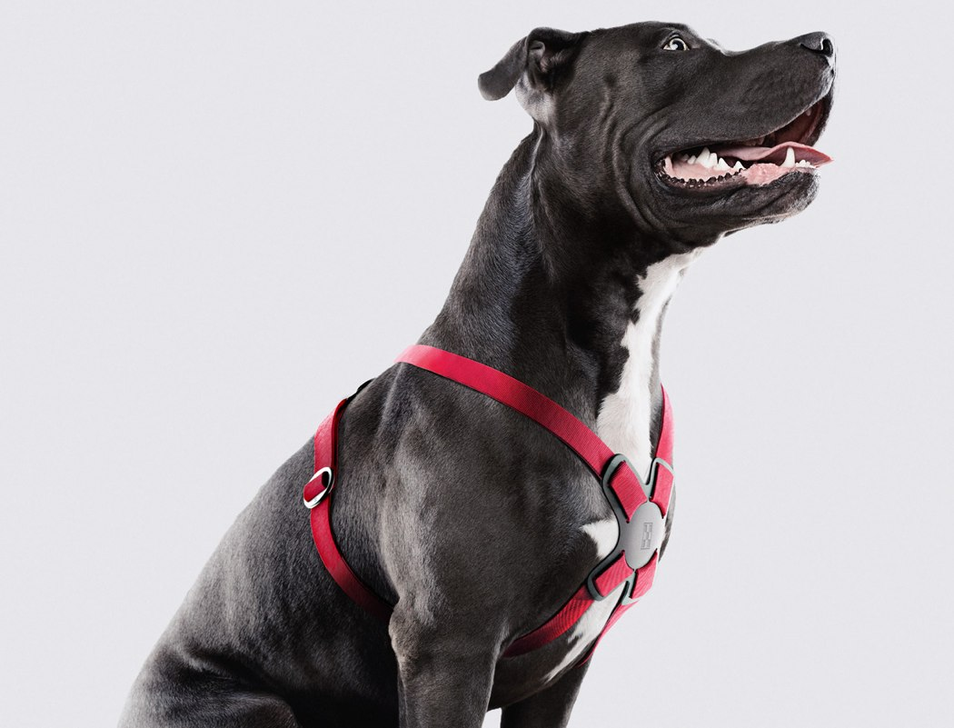 dog harness reviews, best dog harness for walking, dog harness vest, dog harness walmart, types of dog harnesses, chewy dog harness, dog harness with handle, kong dog harness